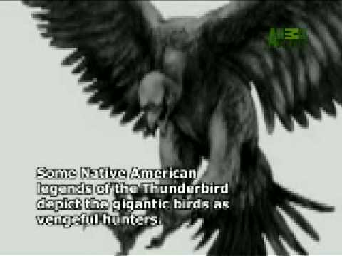 Thunderbird - YouTube - photo#14