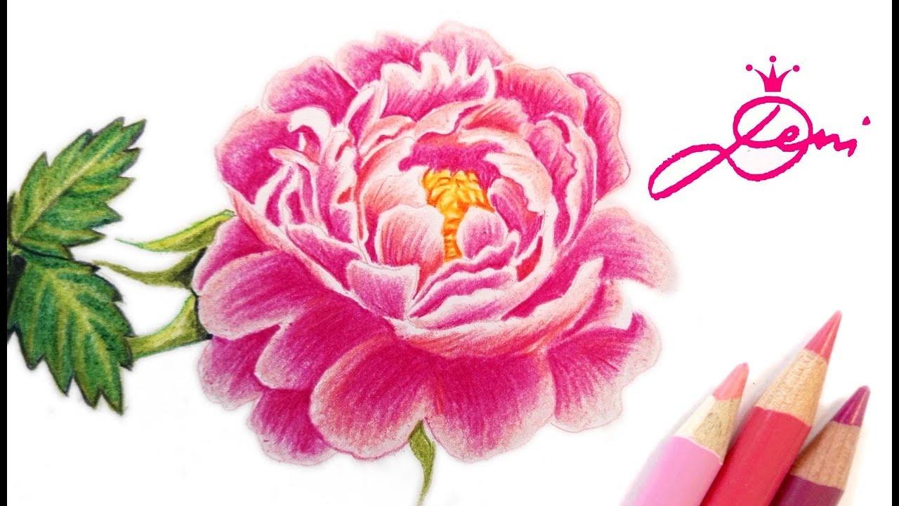 pfingstrose zeichnen blumen zeichnung, pfingstrose zeichnen lernen 🌺how to draw a peony 🌸 rose peonia, Design ideen