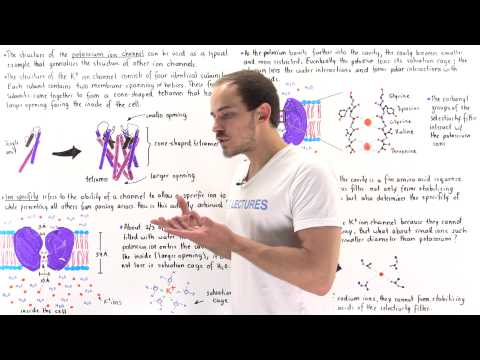 Ion Specificy and Structure of Ion Channels