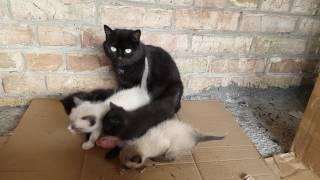Мама-кошка кормит котят. В добрые руки котята. Киев