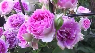 CRUCIFIX JAPANのheathです。 公式ブログ '☆:*:.薔薇と天使のお庭造り'☆...