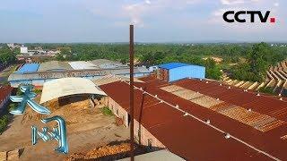 《天网》 异味寻踪:停工多时的木材厂散发阵阵臭味 里面竟藏着惊人大案 | CCTV社会与法
