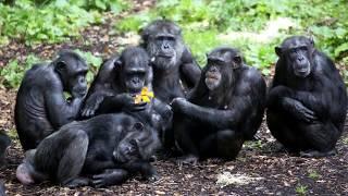 10 Children Raised By Wild Animals