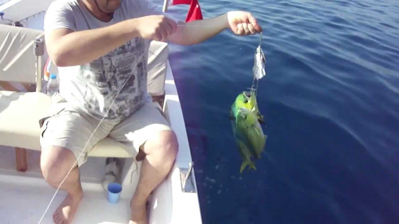 Lambuka Nasıl Bir Balıktır