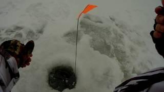 Отличный клёв на жерлицы. Зимняя рыбалка на озере.