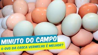 MINUTO DO CAMPO - O OVO DA CASCA VERMELHO É MELHOR?