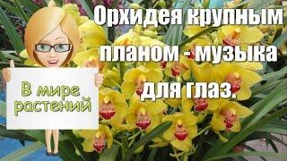 Орхидея  Лучшие фото мира