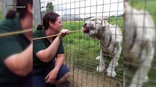 Großbritannien: Tiger tötet Pflegerin in Zoo