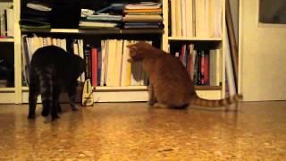 Gato asustado por ruido procedente de un aparato. Videos divertidos y graciosos de animales