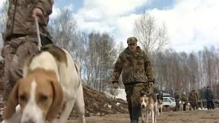 Традиционная выставка охотничьих собак