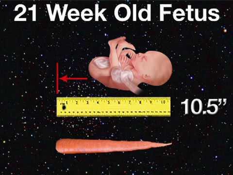 Fetal Development Week 21 (Pregnancy Health Guru)