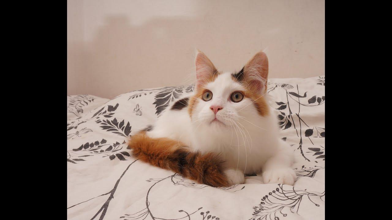 Выставка кошек в Воронеже - YouTube