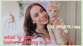 Things I Wish I Knew Before Getting A Cat / CAT UPDATE (7 months old)
