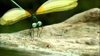 Minuscule.S01E33..Dragonflies