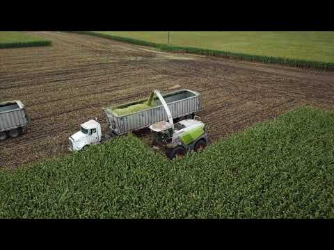 CY Harvesting, chopping silage 2017