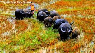 KHÚC NHẠC QUÊ HƯƠNG - Hoàng Anh ft Hoàng Tú   Vietnam's Traditional Music
