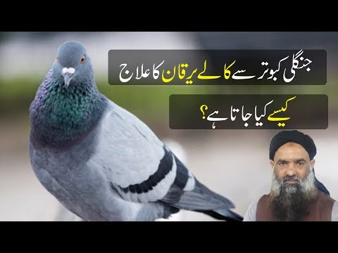 jungli kabootar se kalay yarkan ka ilaj dr Muhammad Sharafat Ali Health Tips 2019 | Home Remedy