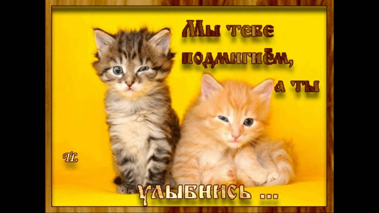 Прикольные поздравления день кошек фото 421
