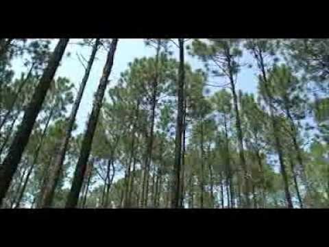 USDA NRCS Longleaf Pine Initiative In Louisiana