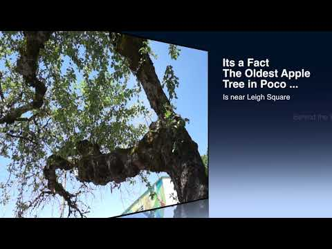 Do you know where the oldest Apple Tree is in Poco