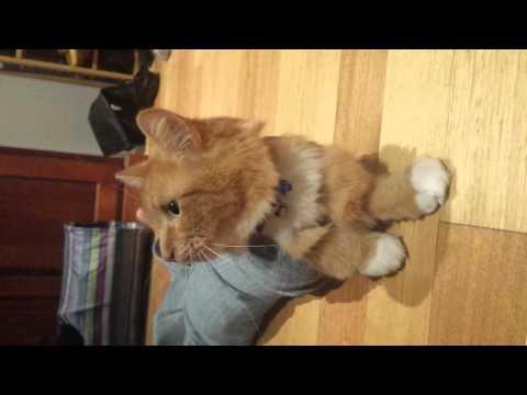Cat Toulouse escapes Jeans