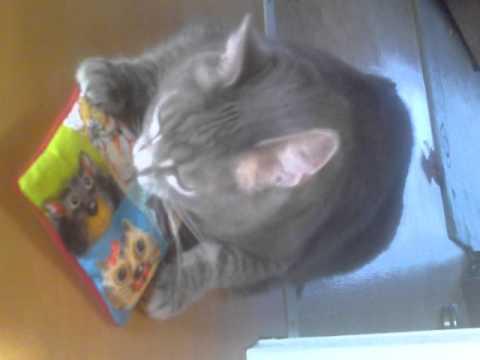 Mr. Jerry mit Marion´s Katzen-Sackerl