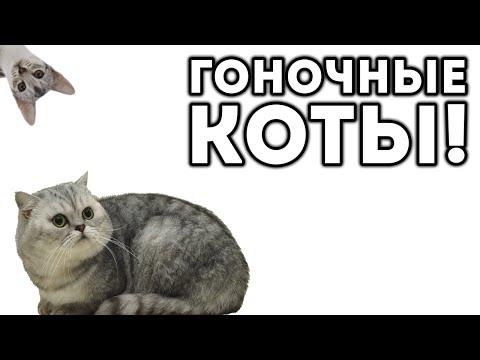 ГОНОЧНЫЕ КОТЫ!