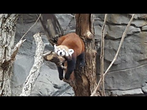 The Minnesota Zoo