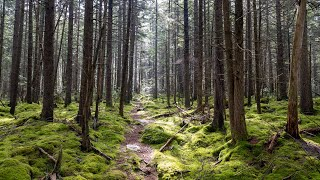 Cranberry Wilderness Backpacking (West Virginia) - Mąy 2020