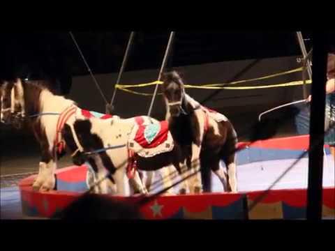 Shrine Circus 2018 Animal Acts