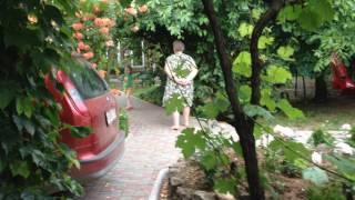 видео Гостевой дом Диво