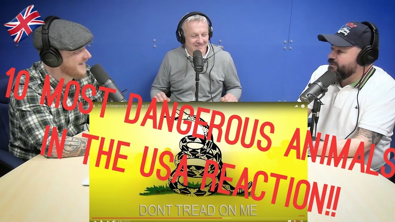 10 Most Dangerous Animals in the U.S. REACTION!!   OFFICE BLOKES REACT!!