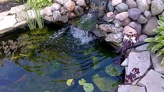 Diy Pond