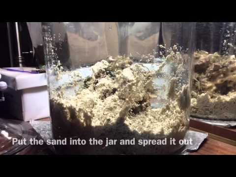 How To Set Up Miniature Saltwater Reef Ecosystem In A Jar