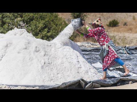 دراهم الملح