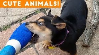 Cutest Pets of the Week Compilation February 2018 | Funny Pet Videos