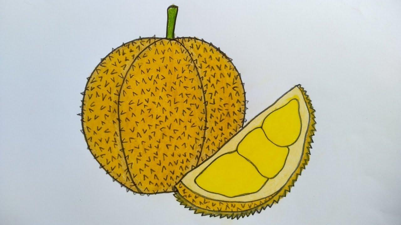 Cara Menggambar Buah Durian Yang Mudah Menggambar Buah Durian Youtube