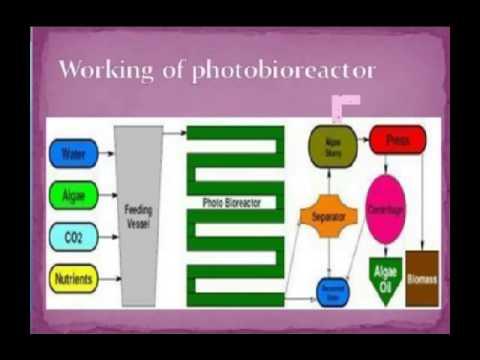 DELACRUZ&LACAMBRA Botryococcenes from Botryococcus Braunii