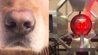 Dogs compete with new machines to sniff out bombs