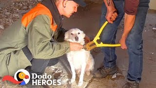 guy-saves-chained-up-dogs-from-abandoned-building-the-dodo-heroes
