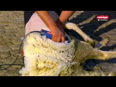 Heiniger Xpert sheep shearing machine