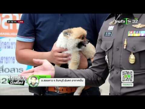 โจรขโมยสุนัข 'ปอมเมอเรเนียน'   30-04-59   ไทยรัฐนิวส์โชว์   ThairathTV