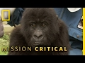 Top 3 Mountain Gorilla Moments | Mission Critical
