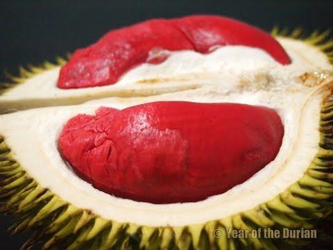 Red Durian Of Brunei & Borneo