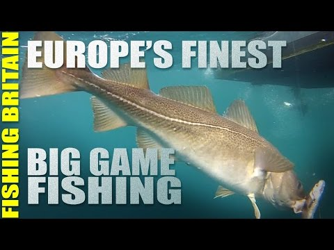 Cod in the Norwegian Sea - Big Game Fishing