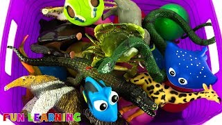 Learn Wild Animals Names For Kids with Fun Box of Animal Toys
