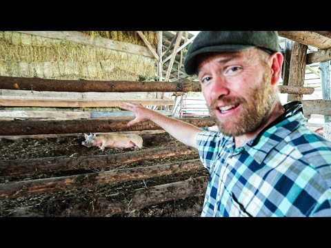 My Hope to make Joel Salatin's Pig System work for me