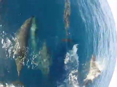 Moreton Island Dolphins - Brisbane (Australia)