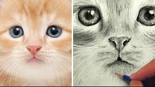 How to Draw a Cat - Kitty