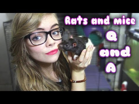 RATS AND MICE Q AND A!!
